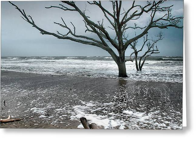 Trees In Surf Greeting Card by Steven Ainsworth