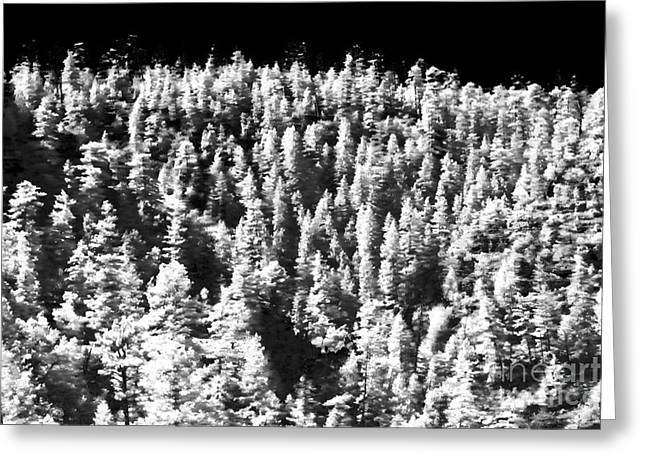 Forest Dweller Greeting Cards - Trees in the Canyon Greeting Card by John Rizzuto