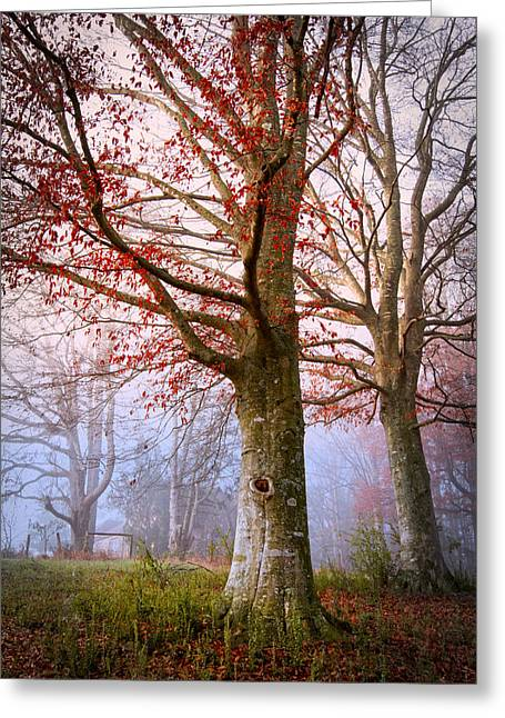 Tennessee Barn Greeting Cards - Trees in the Fog Greeting Card by Debra and Dave Vanderlaan
