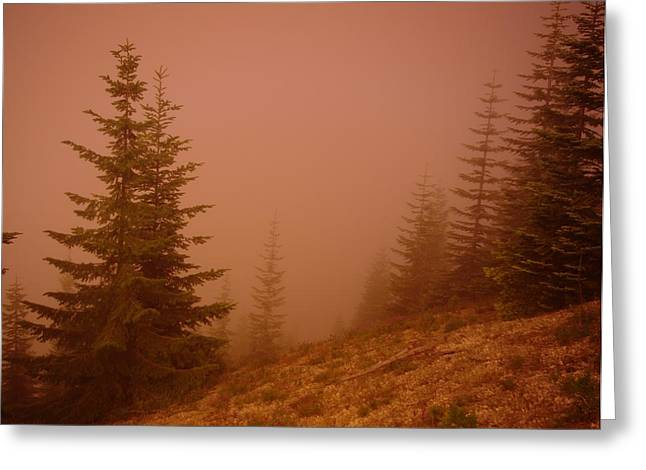 Pine Needles Greeting Cards - Trees in the fog Greeting Card by Jeff  Swan