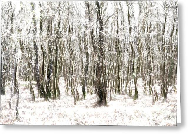 Neutral Colours Greeting Cards - Trees in the Forest Abstract Greeting Card by Natalie Kinnear