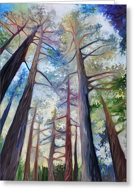 Santa Cruz Paintings Greeting Cards - Trees in the Morning Greeting Card by Cedar Lee