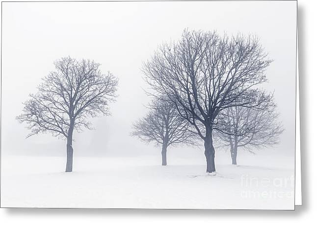 Bare Trees Greeting Cards - Trees in winter fog Greeting Card by Elena Elisseeva