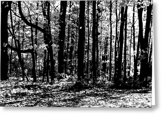 Black And White Photos Pyrography Greeting Cards - Trees Greeting Card by Jeffrey Bess