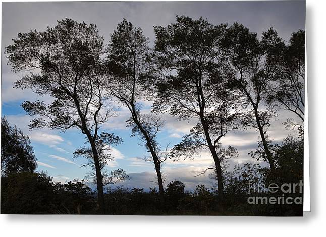 Photos Of Autumn Greeting Cards - Trees Greeting Card by Louise Heusinkveld
