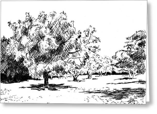 Fruit Tree Drawings Greeting Cards - Trees Greeting Card by Masha Batkova