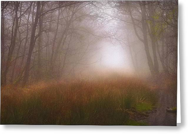 Spring Greeting Cards - Trees Mist 1 Greeting Card by Curtis Radclyffe