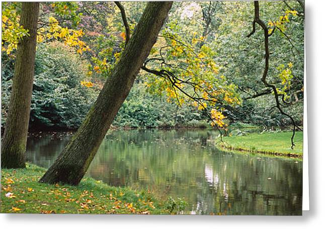 Fallen Leaf Greeting Cards - Trees Near A Pond In A Park Greeting Card by Panoramic Images