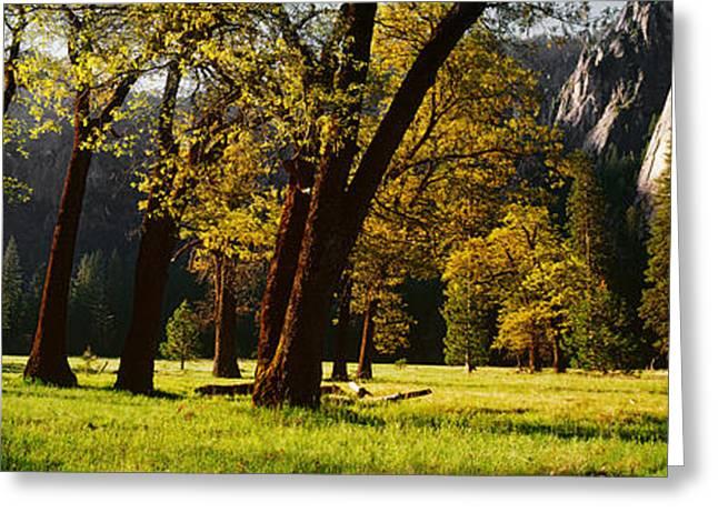 Yosemite National Park Greeting Cards - Trees Near The El Capitan, Yosemite Greeting Card by Panoramic Images
