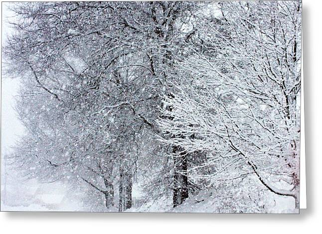 Snowy Evening Greeting Cards - Trees of Beauty Greeting Card by Marcia Lee Jones