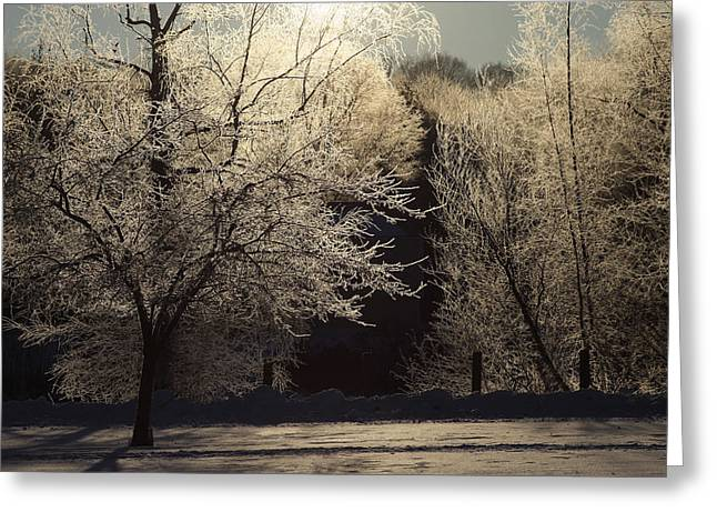 Trees Of Ice Greeting Card by Karol Livote