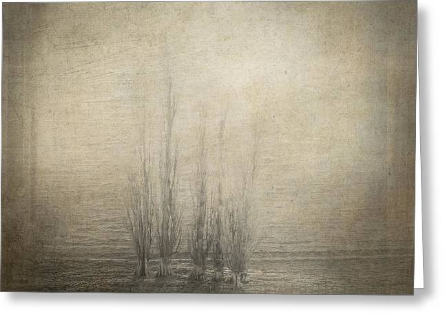 """""""shadow Trees"""" Greeting Cards - Trees Of Silence Greeting Card by Constance Fein Harding"""