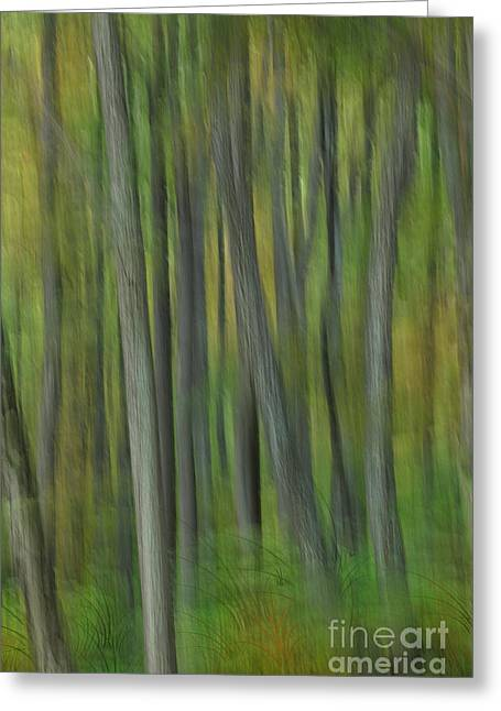 Surreal Landscape Photographs Greeting Cards - Trees of the Forest Green - Blue Ridge Parkway Greeting Card by Dan Carmichael