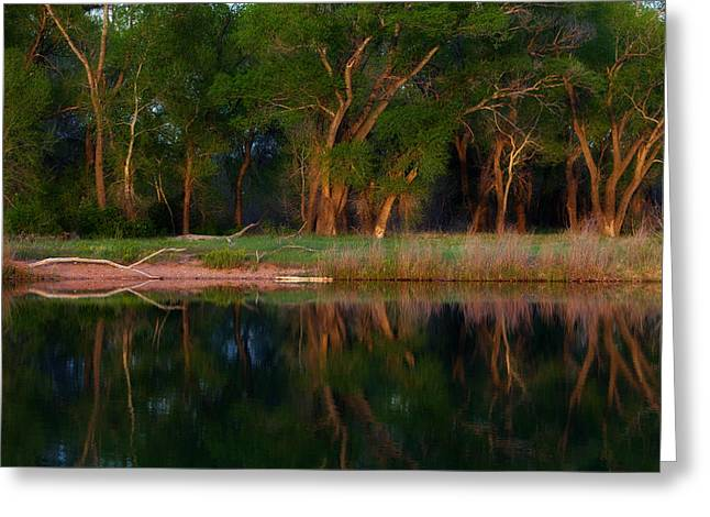 Plant Greeting Cards Greeting Cards - Trees of the Lake Greeting Card by Darren  White
