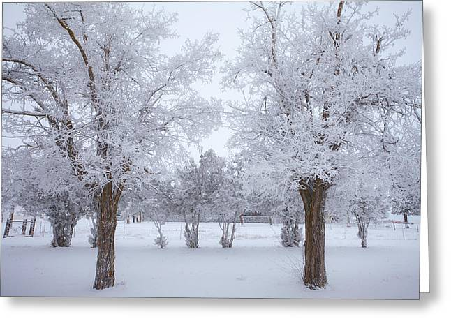 River Scenes Greeting Cards - Trees of Winter Greeting Card by Darren  White