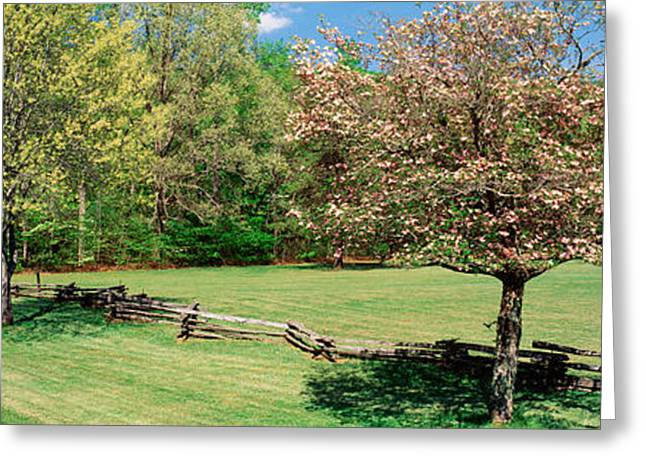 Pisgah Greeting Cards - Trees On A Field, Davidson River Greeting Card by Panoramic Images