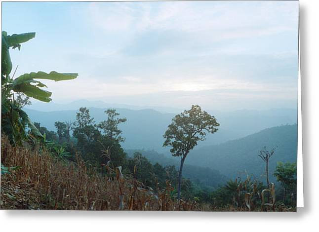 Chiang Greeting Cards - Trees On A Hill, Chiang Mai, Thailand Greeting Card by Panoramic Images