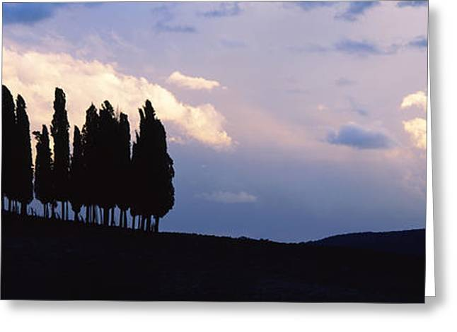 Crete Greeting Cards - Trees On A Hill, Crete Senesi, Tuscany Greeting Card by Panoramic Images