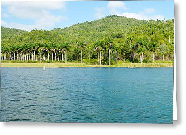 Del Rio Greeting Cards - Trees On A Hill, Las Terrazas, Pinar Greeting Card by Panoramic Images