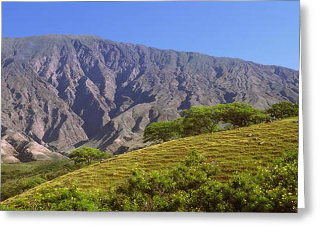 Haleakala Greeting Cards - Trees On A Hill Near Haleakala Crater Greeting Card by Panoramic Images