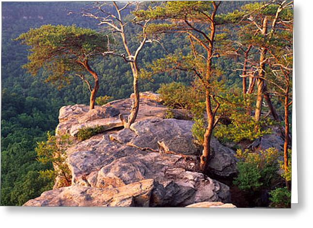 Roost Greeting Cards - Trees On A Mountain, Buzzards Roost Greeting Card by Panoramic Images