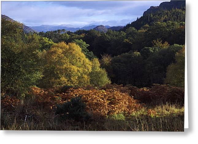 Autumn Colors Greeting Cards - Trees On A Mountain, Glen Carron Greeting Card by Panoramic Images