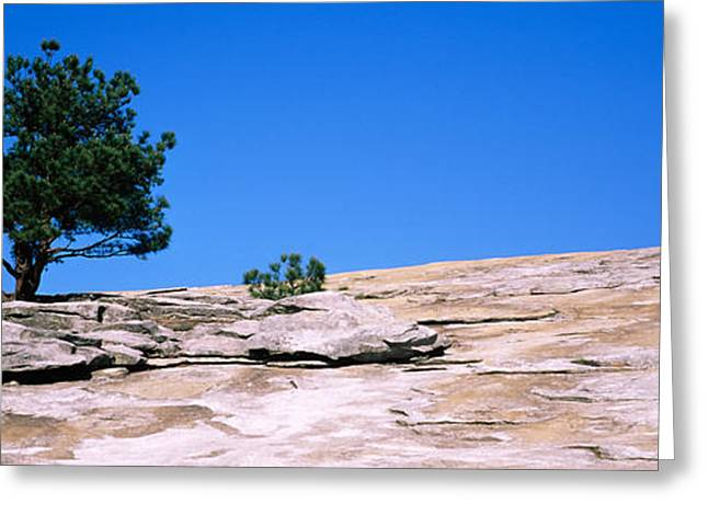 Toughness Greeting Cards - Trees On A Mountain, Stone Mountain Greeting Card by Panoramic Images
