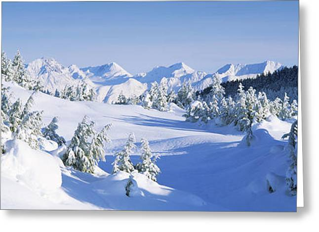 Snow Scene Landscape Greeting Cards - Trees On A Snow Covered Landscape Greeting Card by Panoramic Images
