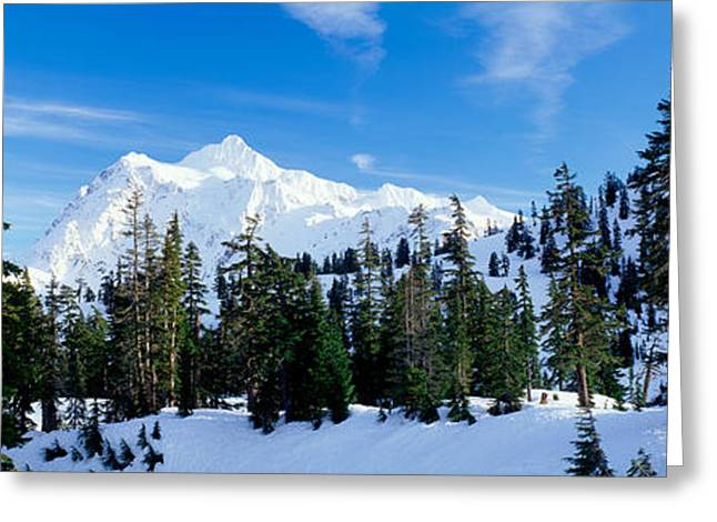 Urban Images Greeting Cards - Trees On A Snow Covered Mountain, Mt Greeting Card by Panoramic Images
