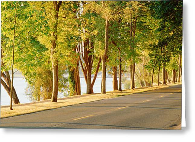 Treelined Greeting Cards - Trees On Both Sides Of A Road, Lake Greeting Card by Panoramic Images