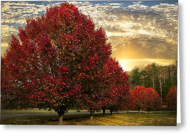 Trees on Fire Greeting Card by Debra and Dave Vanderlaan