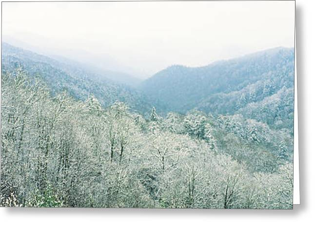 Smoky Greeting Cards - Trees On Mountain, Newfound Gap, Great Greeting Card by Panoramic Images
