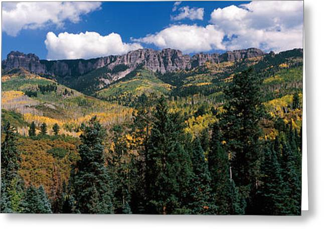 Hill Station Greeting Cards - Trees On Mountains, Ridgway, Colorado Greeting Card by Panoramic Images