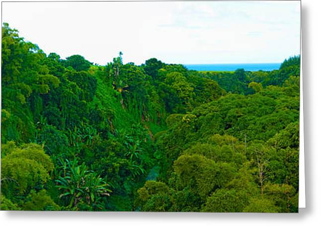 Mauritius Greeting Cards - Trees On The Bay, Rempart And Mamelles Greeting Card by Panoramic Images