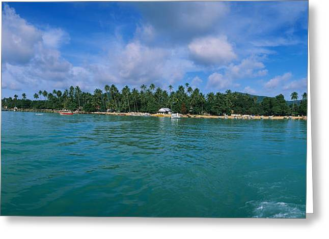 Southeast Asia Greeting Cards - Trees On The Beach, Phuket, Thailand Greeting Card by Panoramic Images