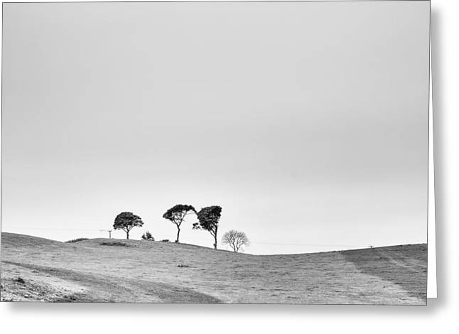 Crisp Greeting Cards - Trees on the Horizon Greeting Card by Nomad Art And  Design