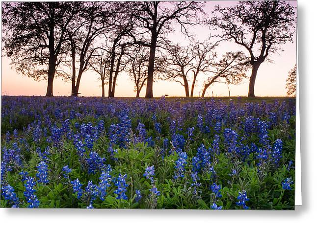 Evening Greeting Cards - Trees on the top of bluebonnet hill - wildflower field in Lake Somerville Texas Greeting Card by Ellie Teramoto