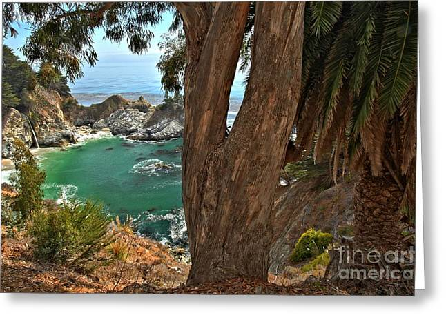 Big Sir California Greeting Cards - Trees Over McWay Falls Greeting Card by Adam Jewell
