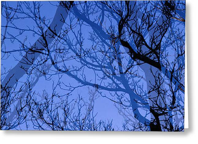 Haze Greeting Cards - Trees Greeting Card by Panoramic Images