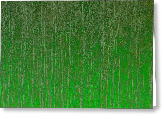 Abstract Digital Art Greeting Cards - Trees Greeting Card by Peter Tellone
