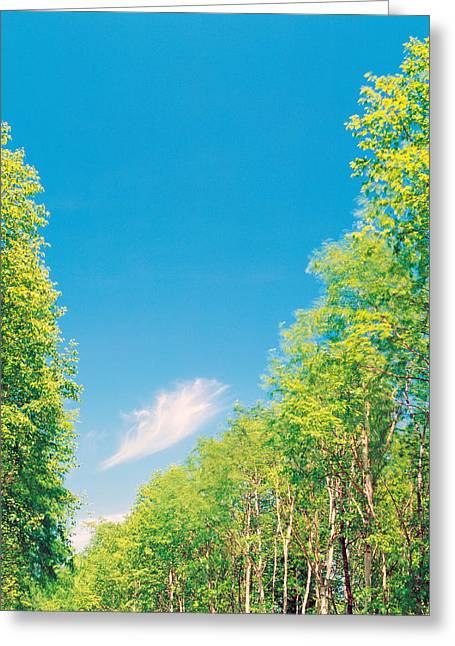 Height Greeting Cards - Trees Projected Against Blue Sky Greeting Card by Panoramic Images