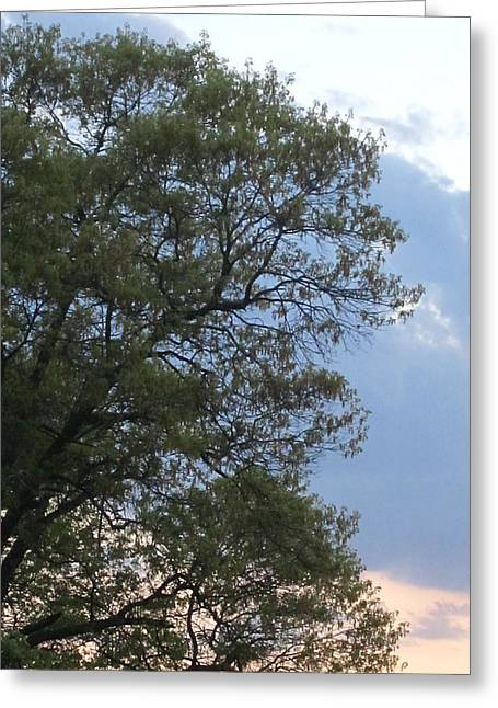 Guy Ricketts Photography Greeting Cards - Trees Remember Greeting Card by Guy Ricketts