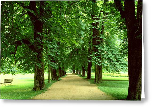 Respite Greeting Cards - Trees Salzburg Austria Greeting Card by Panoramic Images