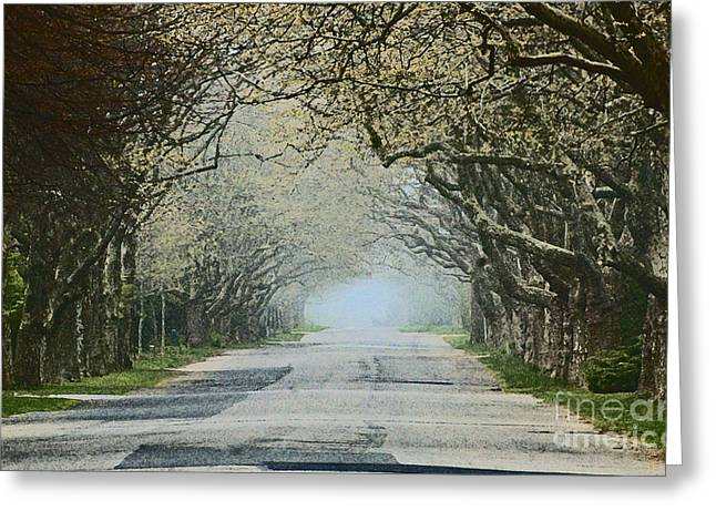 Tree Lines Mixed Media Greeting Cards - Trees Serenity Path Greeting Card by ArtyZen Studios