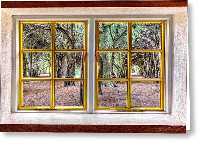 Looking Out Side Greeting Cards - Trees Through a Window Greeting Card by Semmick Photo