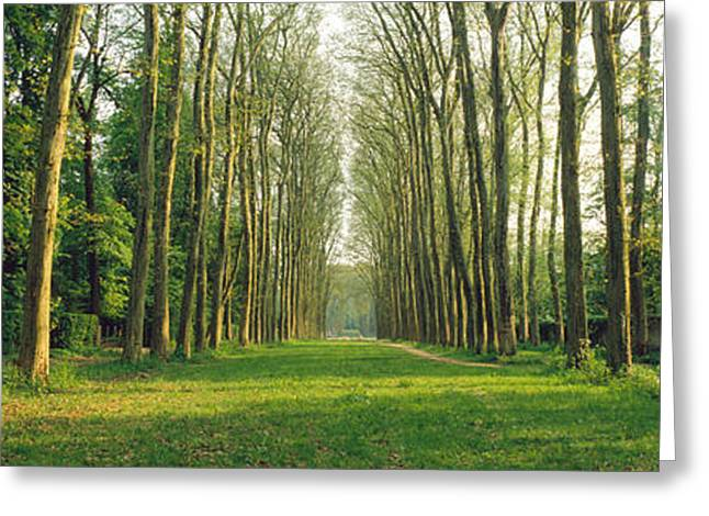 Tree Lines Greeting Cards - Trees Versailles France Greeting Card by Panoramic Images