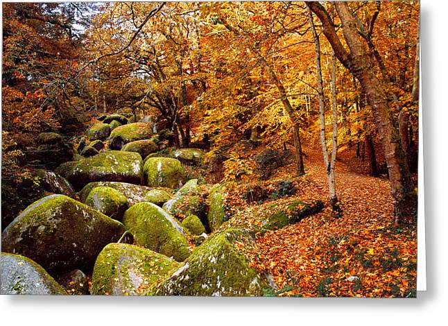 Trees With Granite Rocks At Huelgoat Greeting Card by Panoramic Images