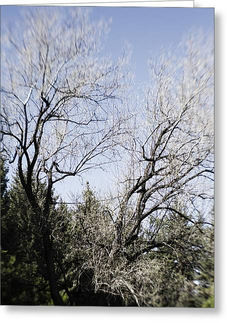 Infer Greeting Cards - Trees with Inferred  Greeting Card by Dan Panattoni