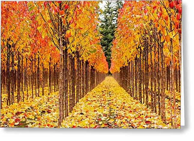 Fall Trees Greeting Cards - Treescape 1 Greeting Card by Rebecca Cozart