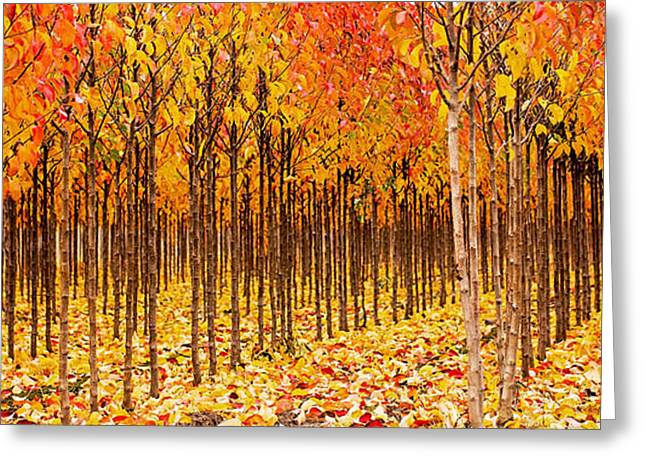 Tree Lined Greeting Cards - Treescape 2 Greeting Card by Rebecca Cozart